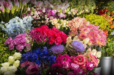 Photo Fiori Bloemen in Leiden, Shopping, Lifestyle & cooking