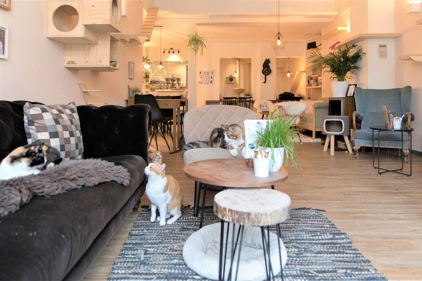 Photo Kattencafé Op z'n Kop in Groningen, Eat & drink, Coffee, tea & cakes, Lunch - #1