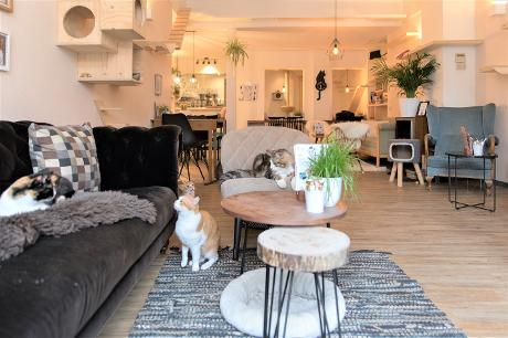 Photo Kattencafé Op z'n Kop in Groningen, Eat & drink, Coffee, tea & cakes, Lunch